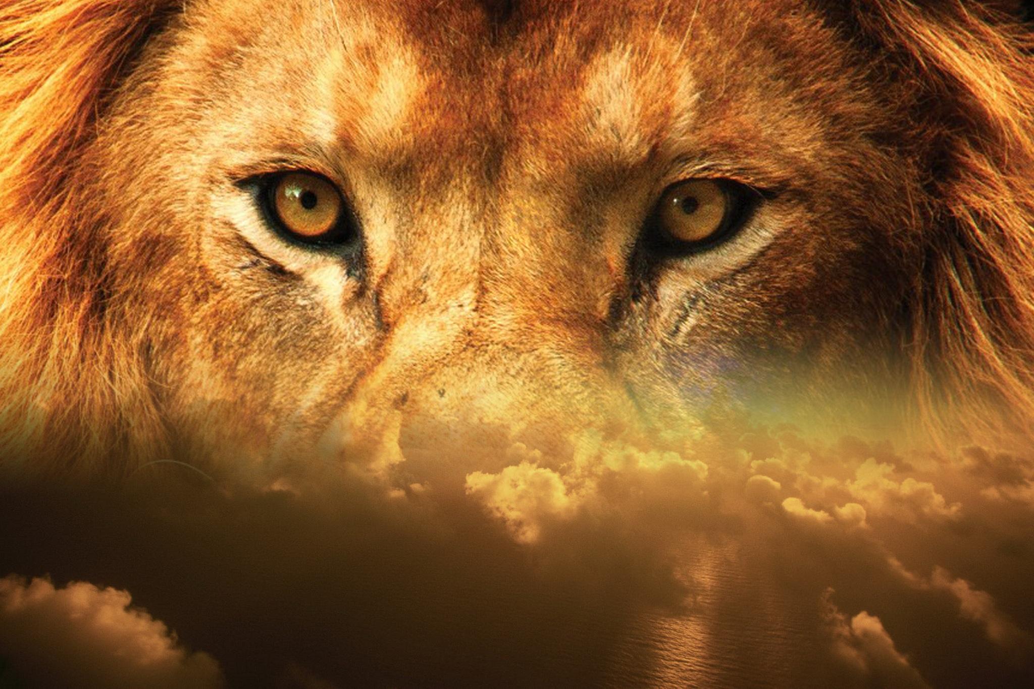 lion-2115592